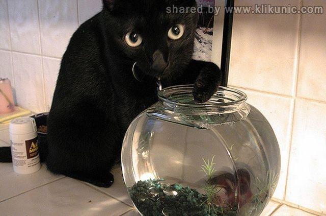 http://3.bp.blogspot.com/-i5wrIQJBcBw/TXXaRjw13EI/AAAAAAAAQaI/NuGbmeFO8lc/s1600/these_funny_animals_632_640_21.jpg