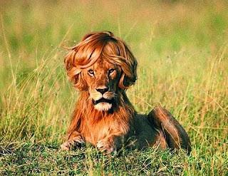 Leão Betinho