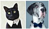 Shop Pet Formals