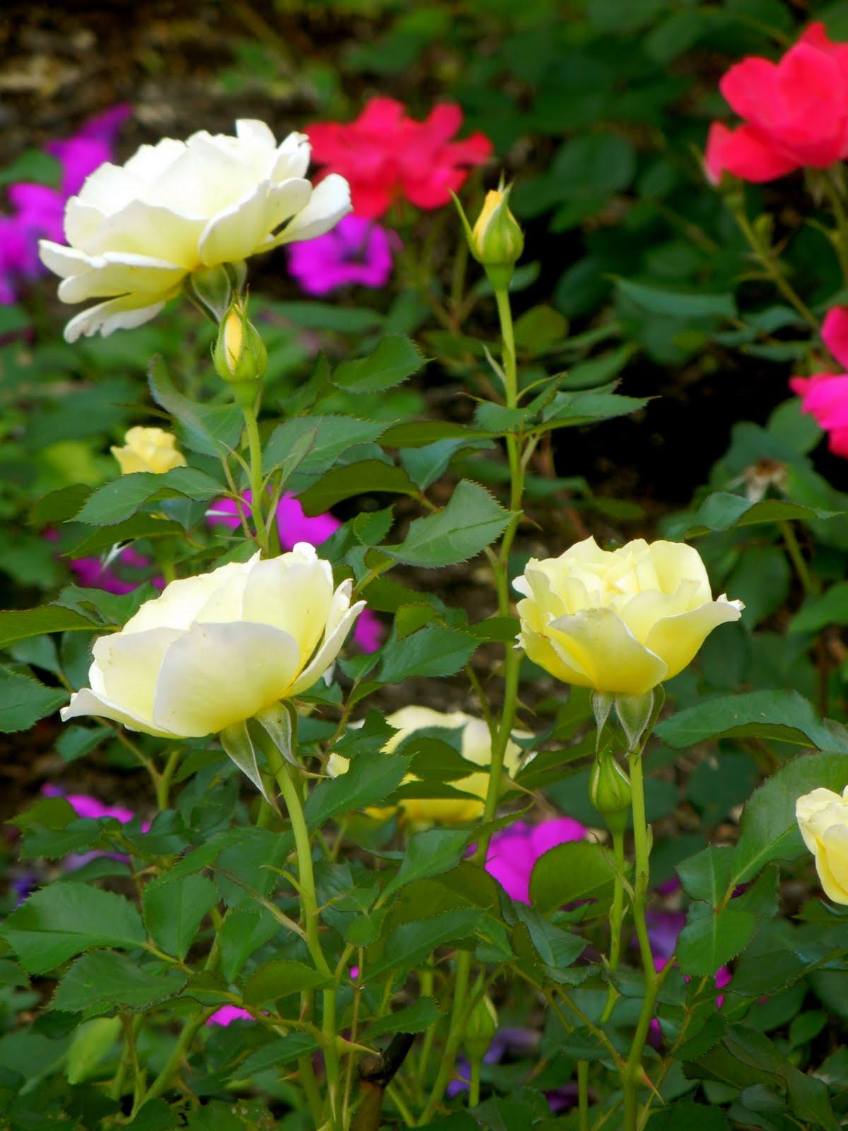 Hotel Baker Hotel Baker 39 S Rose Garden St Charles Illinois