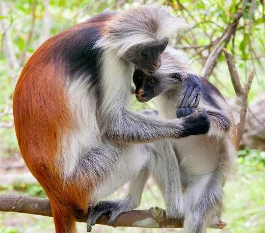 10 Binatang Tercantik Di Dunia