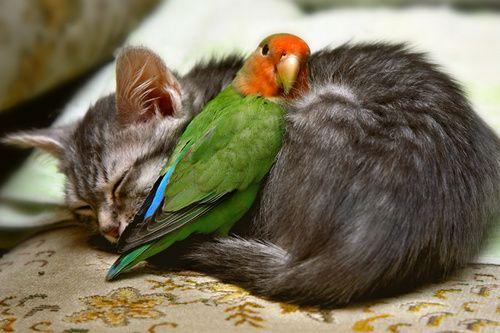Yavru+hayvan+resimleri+rooteto+6 En Şirin Yavru Hayvan Resimleri