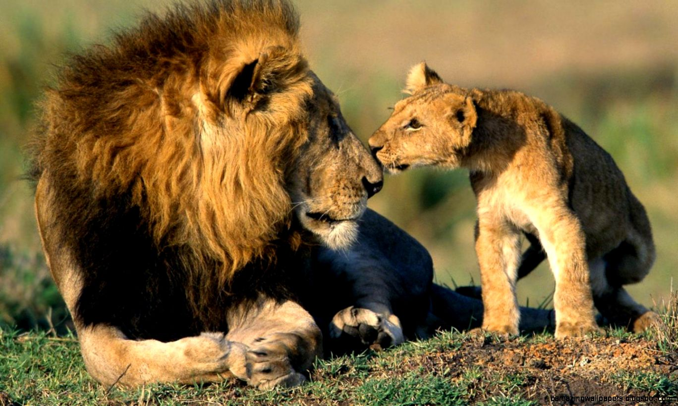 In Africa, the king of animals did not let tourists into the toilet