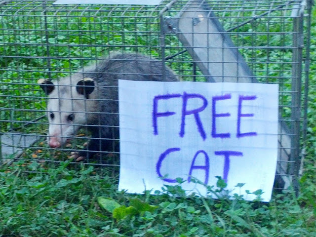funny animal pictures, possum on cage