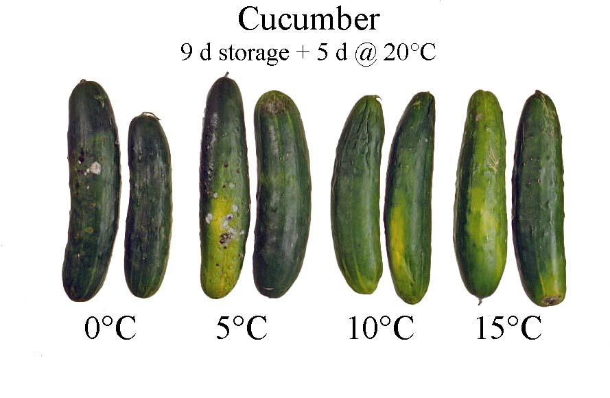 recipe: cucumber translucent inside [3]