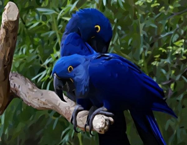 Hd Animals Blue Parrot Wallpaper