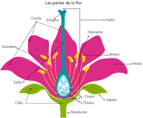 Partes de una flor completa en wallpapers - Imagui