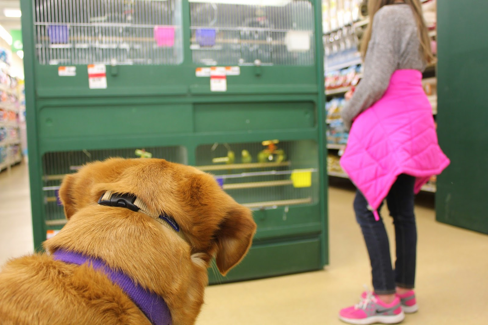 dog watching birds in pet supplies plus store