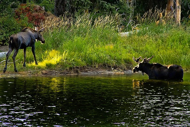 http://idaho.for91days.com/2012/09/19/moose-sighting-in-the-payette-river/