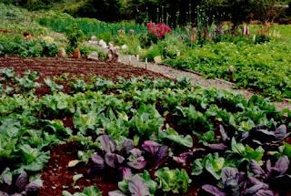 Artículo: Experiencias de Huertos Urbanos comunitarios: la agricultura urbana en Bélgica Huerto_lechugas