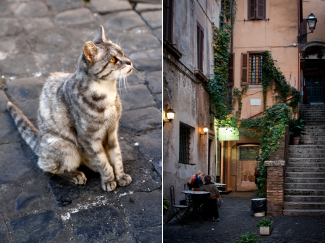 Italian cat and gelateria