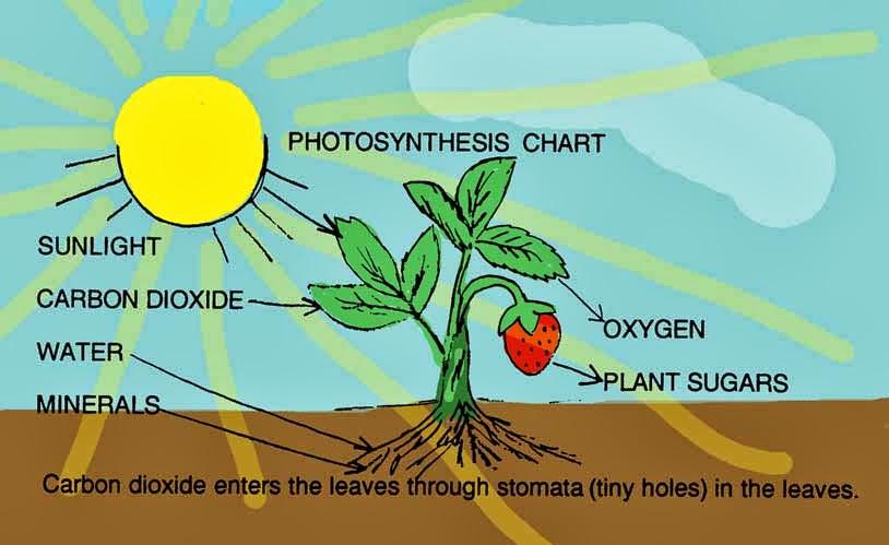 photosythesis respiration