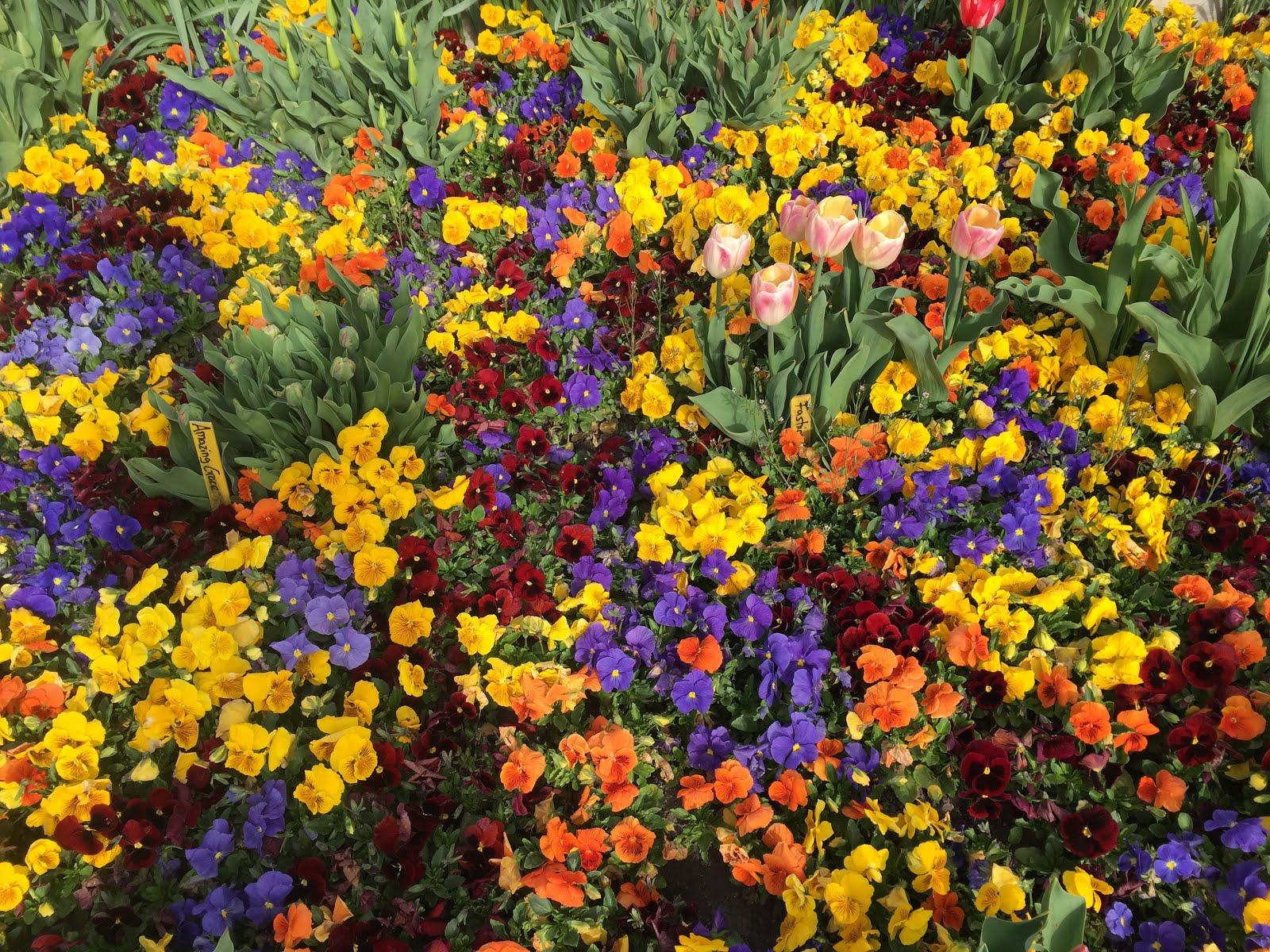 Blumenpracht '18