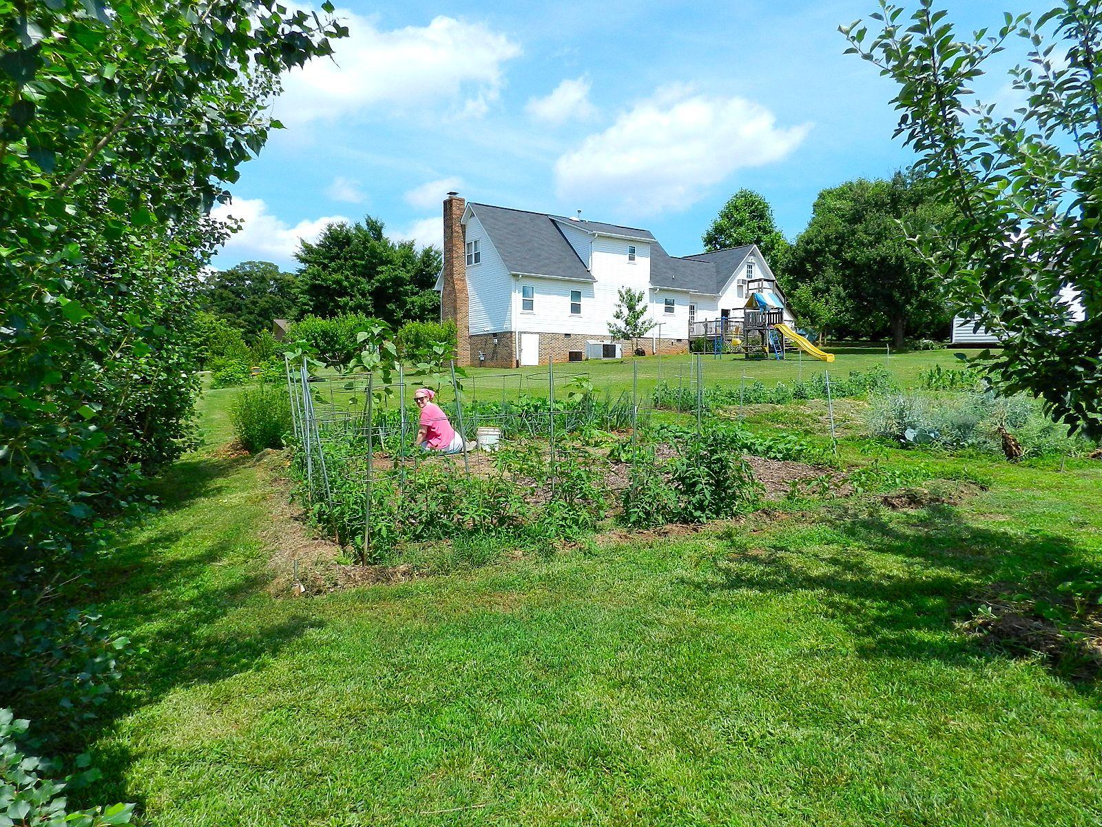 Palmetto Acres Garden June 2013