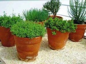 horta caseira em vasos