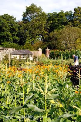 august-in-the-garden