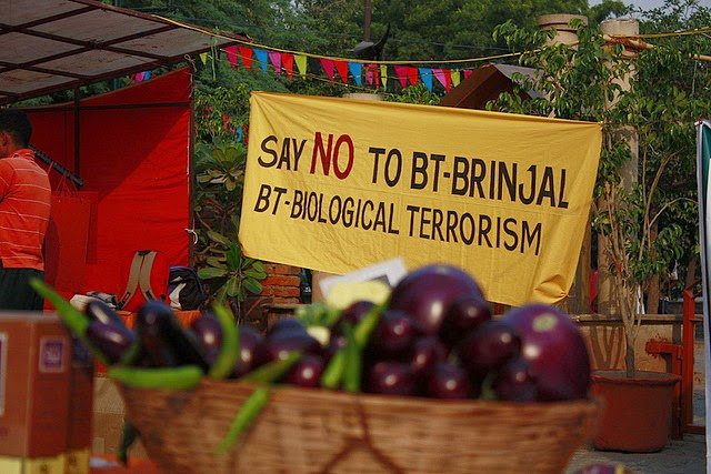 Photo of aubergines in a basket with protest sign behind - no to BT brinjal