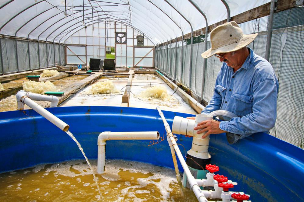 Lebanese aquaculture aquaculture raceway system for for Fish farm missouri