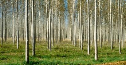 Proyecto de Forestación - Plantación Forestal Madura