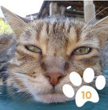 Cliquez ur la photo... et votez pour Totoro