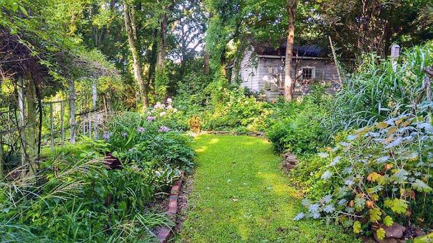 early morning wet garden