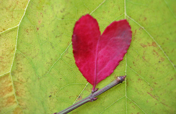 Leaf love beautiful heart shaped leaves empowerment zone the photographer said the tiny red heart shaped leaf was one of the last clinging to a branch of this shrub so i turned it upside down and held it up mightylinksfo