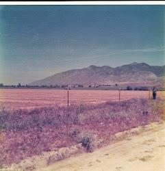 Meadowlark, Valle Vista, California