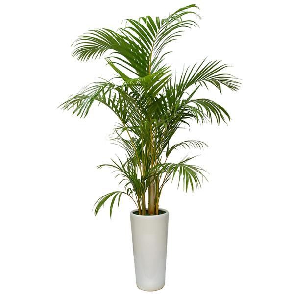 Top 10 Nasa Air Purifying Plant Jing Garden