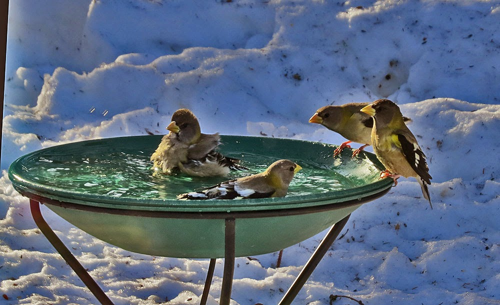 Image result for Heated Bird Baths