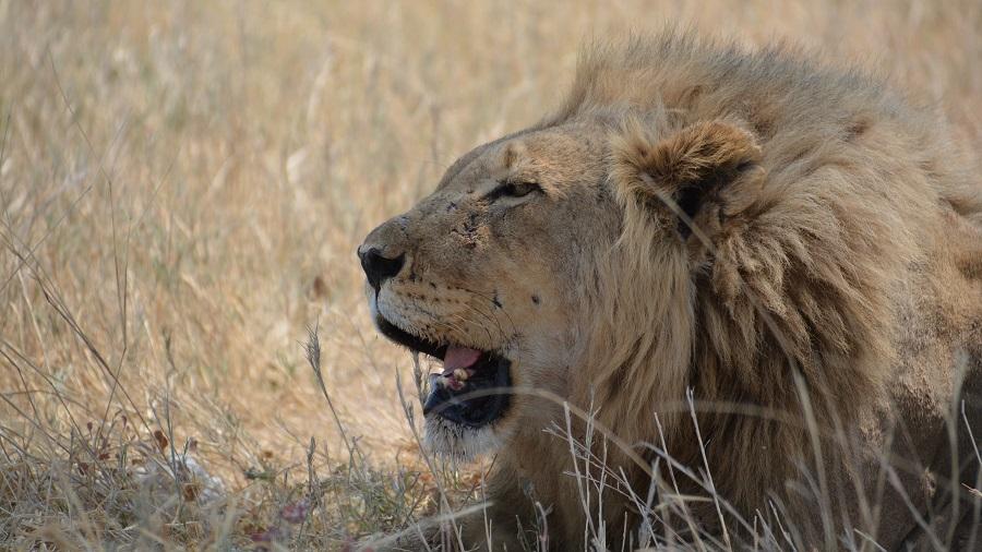NAMIBIJA IN BOCVANA 2016