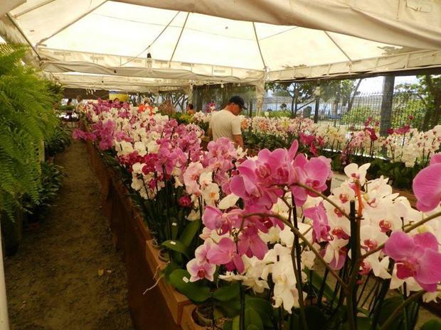 como plantar ou cultivar orquídeas