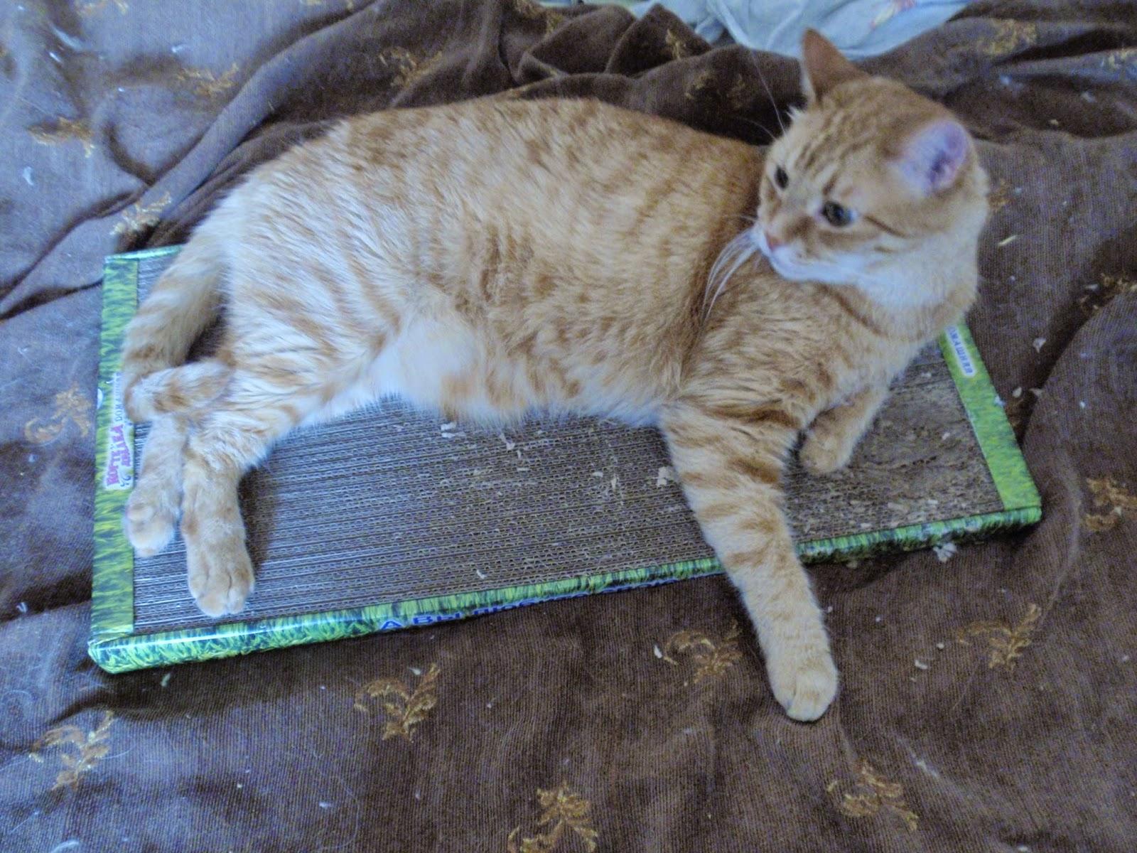 Пауч Роял Канин VET Sensitiviti Control Feline (Сенситив