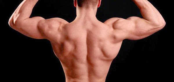mandatory back workouts