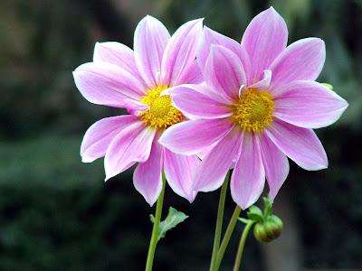 Flores color púrpura adornando el jardín