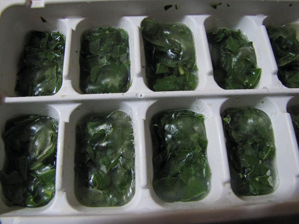 Frozen Basil Ice Cubes