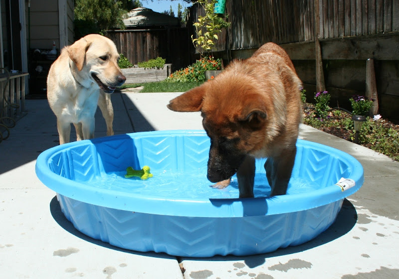 kira standing in blue baby pool while cabana looks on with an open mouthed smile