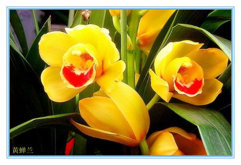 Hoa Vàng Khoe Sắc