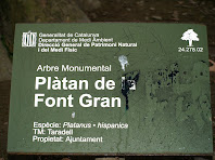 Placa identificativa d'Arbre Monumental de Catalunya