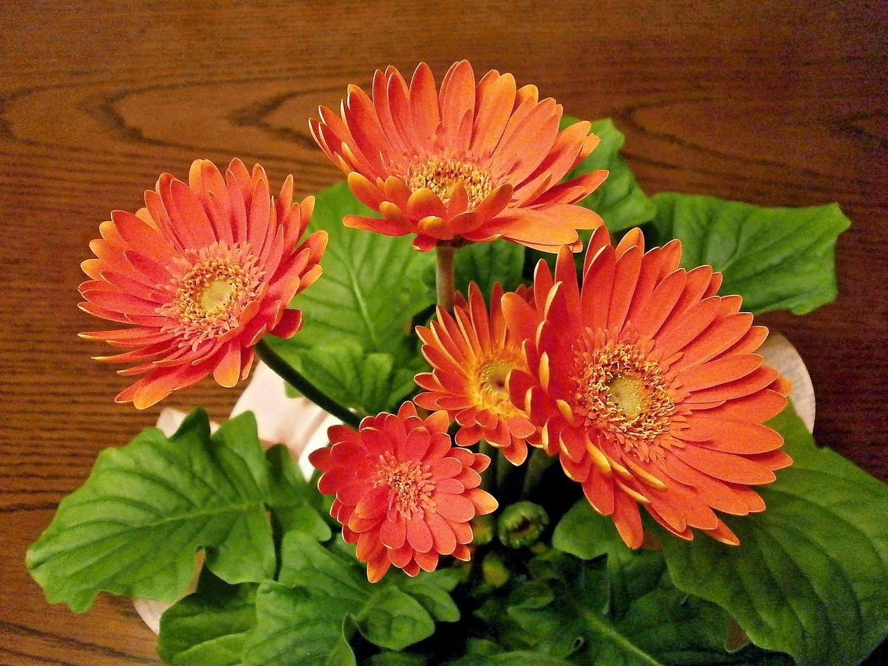 Οικολογικός τρόπος για φυσική γυαλάδα των φύλλων των λουλουδιών σας