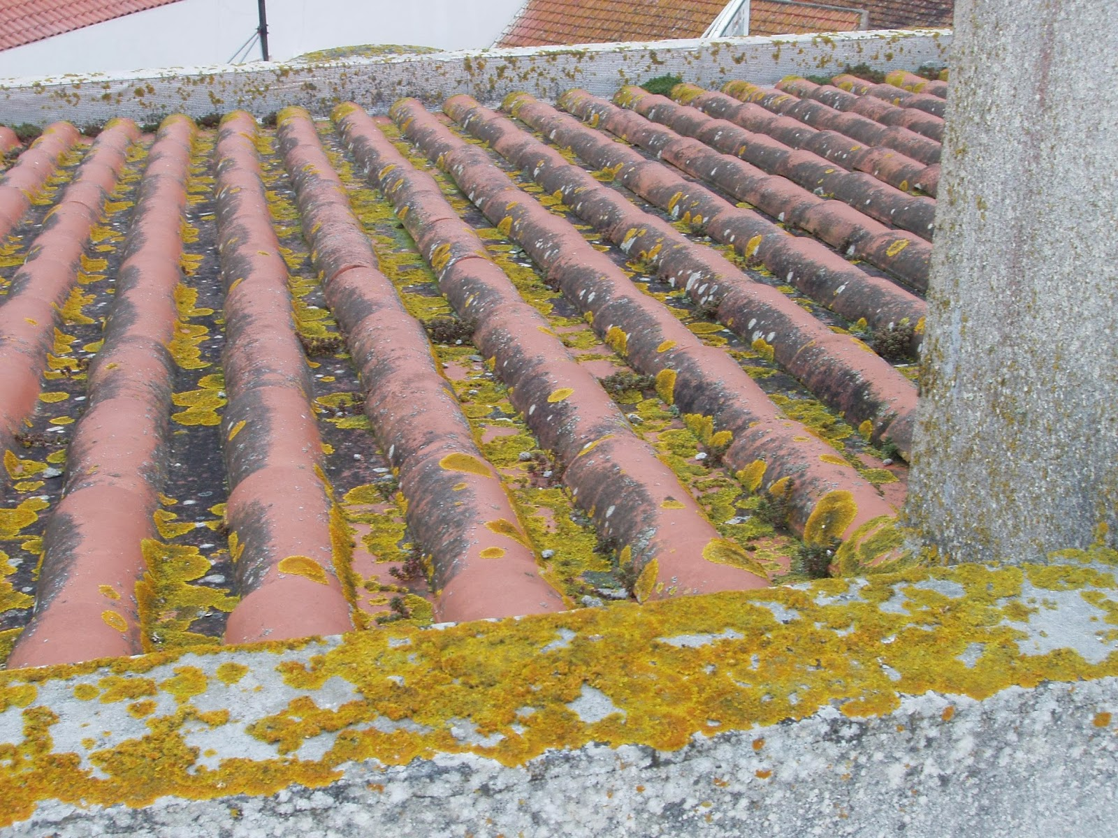 Telhado-em-telha-de-barro-com-fungos-e-musgos