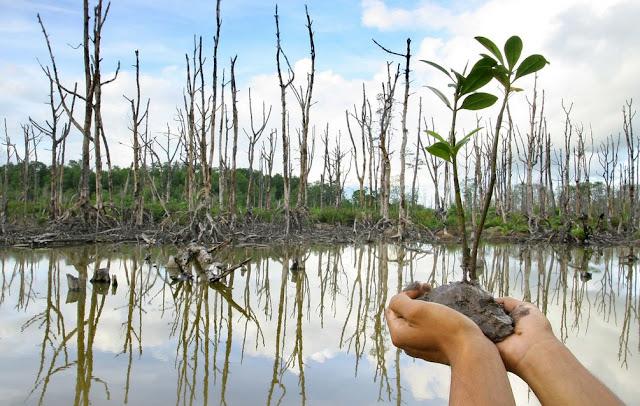 Kepelbagaian Bio Hutan Paya Bakau