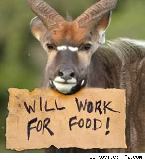 gazelle holding will work for food sign