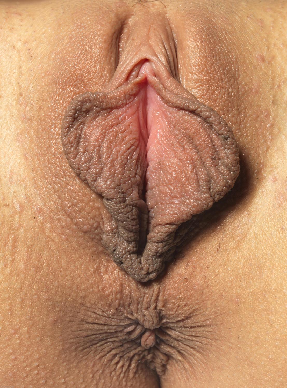 Фото писи половых губ клитора крупным планом 27 фотография