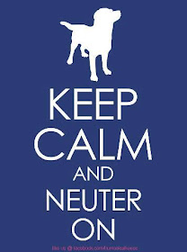 NEUTER & SPAY it's the responsible thing to do
