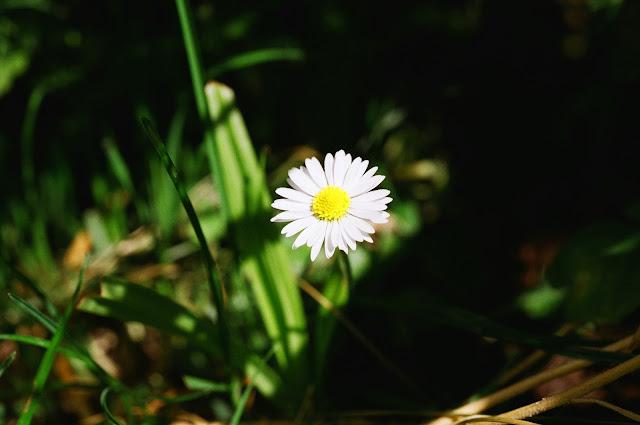 Daisy, Deal 2015 © VAC