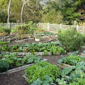 Home Vegetable Garden Design | Best Modern Furniture Design ...