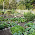 Vegetable Garden Design Examples