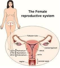 Bahaya Di Balik Pembengkakan Rahim
