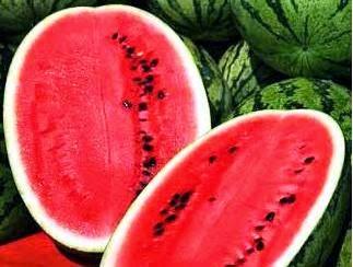 Cara meningkatkan hasil panen budidaya semangka dengan pupuk organik nasa