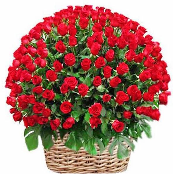 bunga mawar, bunga mawar 100 tangkai, bunga mawar besar, toko bunga, florist jakarta, bunga valentine,toko bunga jakarta, toko bunga jakarta barat